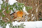 Mangiatoia per uccelli — Foto Stock