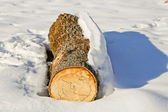 Tree trunk in the snow — Stock Photo
