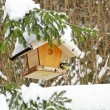 Bird feeder — Stockfoto #20255409