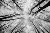 Árboles vista amplia — Foto de Stock