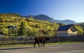 Cow in autumn landscape — Stock Photo