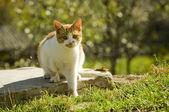 Süße katze — Stockfoto