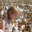 Young girl walking in a field of cotton - Stock Photo