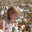 Royalty-Free Stock Photo: Young girl walking in a field of cotton