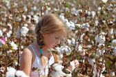Young girl walking in a field of cotton — Stock Photo