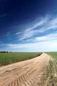 Road leading through a field — Stock Photo