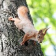 Squirrel on the tree — Stock Photo