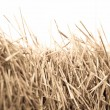 Mown wheat close-up during — Stock Photo #29728523