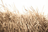 Mown wheat close-up during — Stock Photo