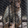 Portrait of monkeys enclosed behind bars, summer da — Stock Photo