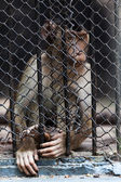 Portrait of monkeys enclosed behind bars, summer da — Stock Photo