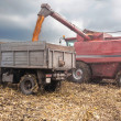 Machines for harvesting maize — Stock Photo