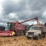 Machinery during harvest corn — Stock Photo