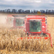 Combines during harvest corn — Stock Photo