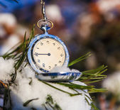 Watch on fir lying in the snow — Stockfoto