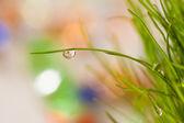 明るいクローズ アップ露で草を葉します。 — ストック写真