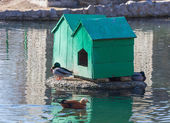 Two home for waterfowl — Stock Photo