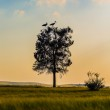 Tree with cranes at sunset — Stock Photo #44891923