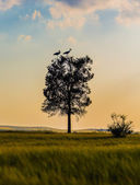 Tree with cranes at sunset — Stock Photo