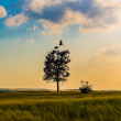 Tree with cranes — Stock Photo #45200547