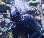 Portrait of a diver — Stock Photo