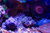 Wild underwater world  — Stock Photo