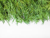 The natural fresh green dill  — Stock Photo