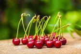 Bunch of ripe cherries — Stock Photo