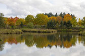 Reflection of Fall Trees by the Pond — Stock Photo
