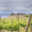 Vineyard in Maryhill Washington State - Stock Photo