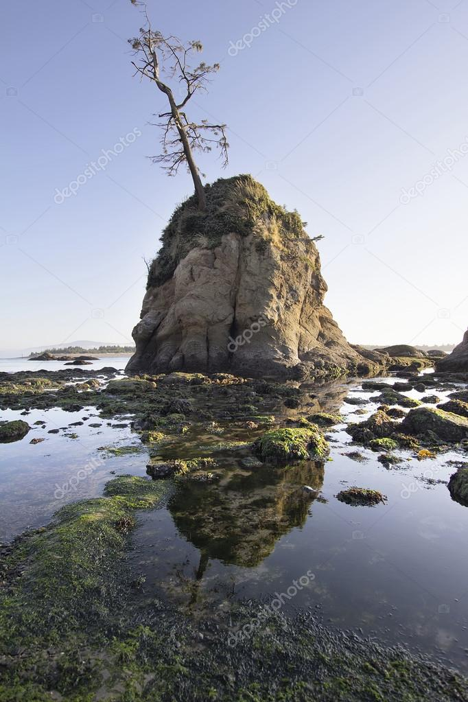 Pig and Sows Inlet Rock in Garibaldi Oregon Coast Tillamook Bay at Low Tide — Stock Photo #12891060