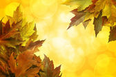 Düşen akçaağaç yaprakları arka plan kenarlık rengi — Stok fotoğraf