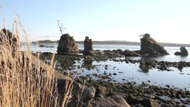 Lowtide at Garibaldi Beach along Oregon Coast 1080p — Stock Video