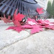 Stock Photo: Raking Fallen Red Maple Leaves Closeup