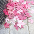 Stock Photo: Raking Fallen Red Maple Leaves
