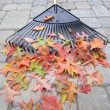 Garden Rake Laying on Backyard Patio — Stock Photo