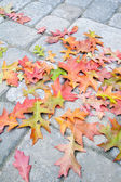 Fallen Oak Leaves on Paver Brick Patio — Stock Photo