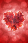 Heart Shape Maple Leaves Red Background — Stock Photo