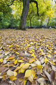 Fall Leaves in Downtown Park — Stock Photo