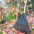 Stock Photo: Raking Fall Leaves in Garden Vertical