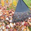 Stock Photo: Raking Fall Leaves in Garden Closeup