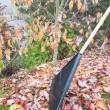 Stock Photo: Raking Fall Leaves in Garden Vertical Side View