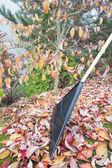 Vražednému podzim listí v zahradě vertikální boční pohled — Stock fotografie