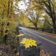 Autumn Along Historic Columbia Highway Bridge — Stock Photo