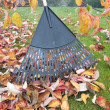 Raking Fall Leaves in Garden — Stock Photo