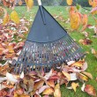 Stock Photo: Raking Fall Leaves in Garden
