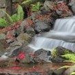 Timelapse of Waterfall Feature in Backyard Garden in Autumn — Stock Video #15639559