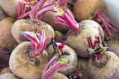 Beets or Beetroots Closeup — Stock Photo