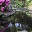 Stock Video: Waterfall with AzaleFlowers, Rocks, Ferns and Moss Water Reflection in Crystal Springs Rhododendron Garden Portland Oregon 1080p