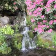 Stock Video: Waterfall with Ferns, Rhododendron Flowers, Hostas and Moss in Crystal Springs Garden in Portland, Oregon 1080p
